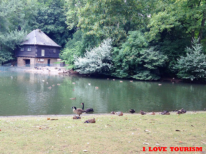 Дюссельдорф: парк с уточками