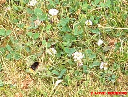Пчелки в парке Дюссельдорфа