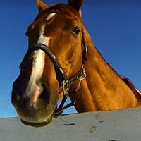 Итоги года лошади