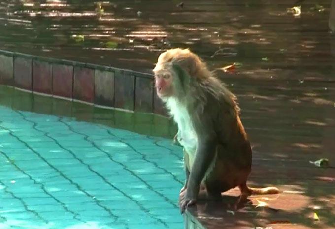 Бассейн для обезьян. Хайнань