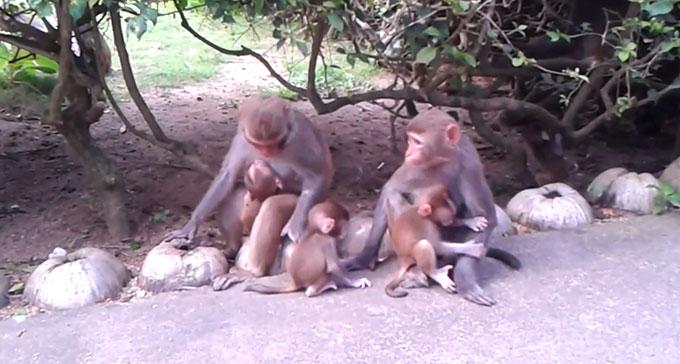 Экскурсия на остров обезьян. Хайнань