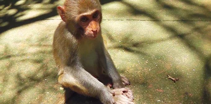 Обезьянка на острове обезьян. Хайнань